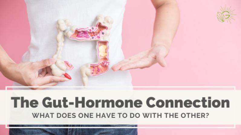 the-gut-hormone-connection-blog-header